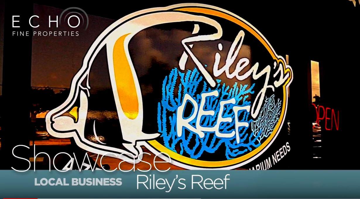 Rileys-Reef